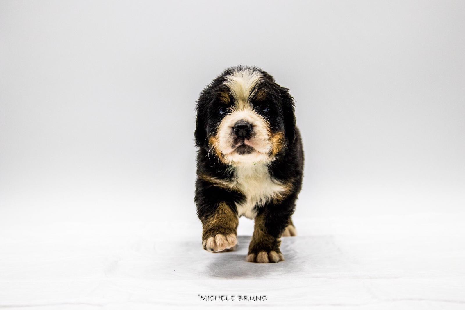 Cuccioli: cominciamo bene...la prima visita veterinaria